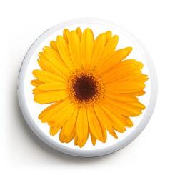 FS-113---Blume